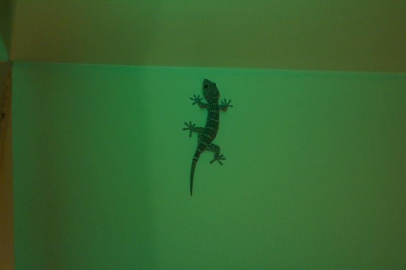 Lizards, everywhere!