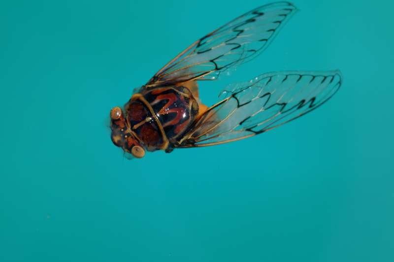 Bug, a Big Bug